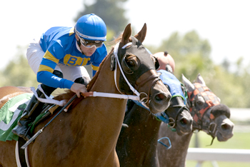 Wine Country Horse Racing