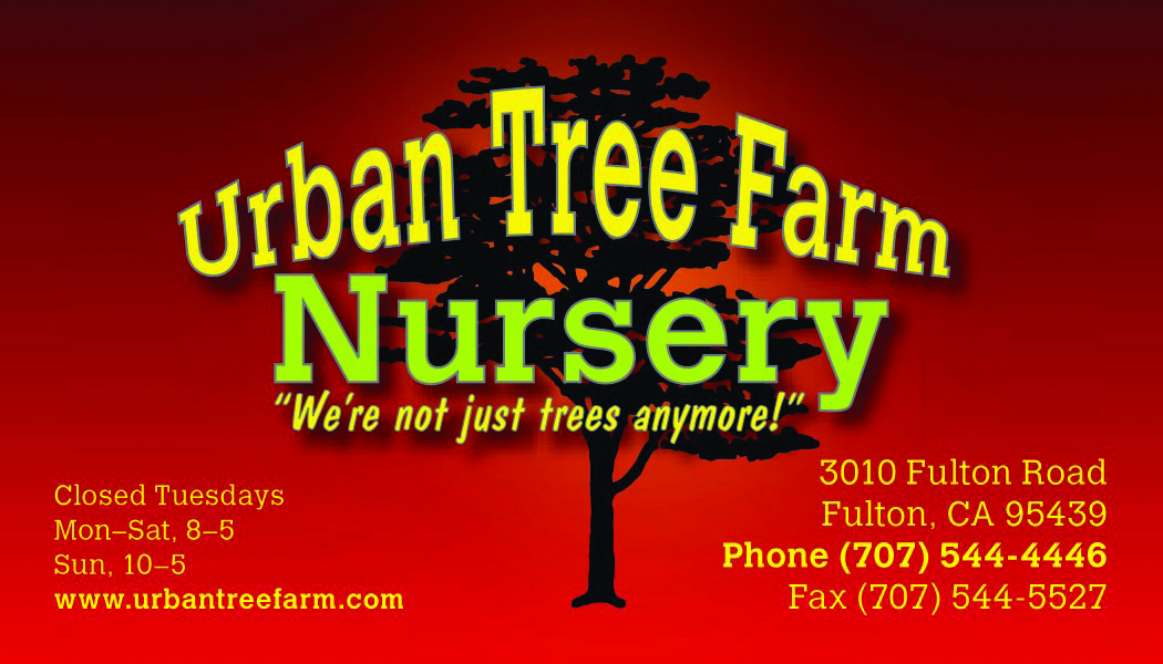 Urban Tree Farm