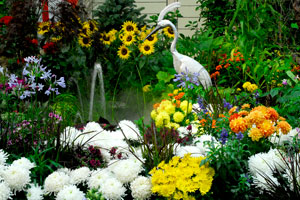 Flower Show - At the Sonoma County Fair